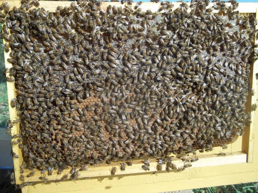 Il FavoThe honeycombLe nid d'abeillesEl Panal